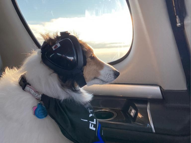 Trixie_Flying_Verijet